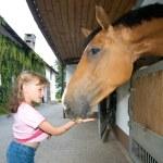 Girl feeding horse — Stock Photo