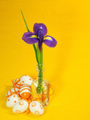 Orange easter eggs and iris — Stock Photo