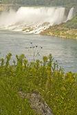 Niagarafallen — Stockfoto
