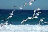 Létající segulls — Stock fotografie