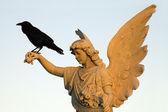 Kraai en engel — Stockfoto