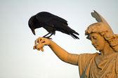 Angel and crow — Стоковое фото