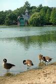 Central park-wahrzeichen — Stockfoto