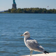 Stock Photo: Segull and statue of liberty