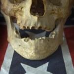 American skull — Stock Photo #9721642