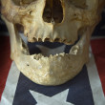 American skull — Stock Photo