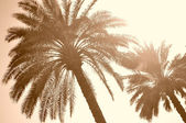 Palms sepia — Stock Photo