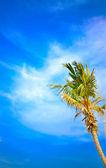One palm tree and deep blue sky — Stock Photo