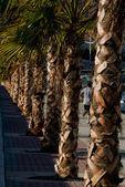 Palmträd — Stockfoto
