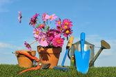 Garten-ringelblume konzept drei — Stockfoto