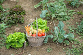 Kitchen garden four — Stock Photo