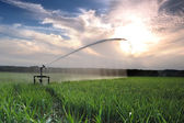 Irrigation three — Stock Photo