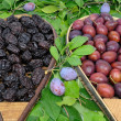 Plum three — Stock Photo