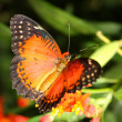 Butterfly — Stock Photo #10211665
