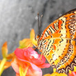 Butterfly — Stock Photo #10211672