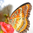Butterfly — Stock Photo #10211685