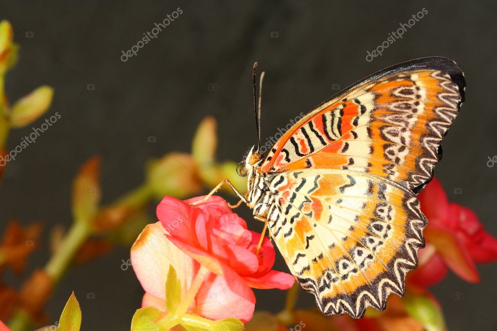 Butterfly  Stock Photo #10211670