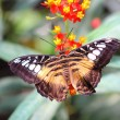 Butterfly — Stock Photo #10239696