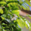 Butterfly — Stock Photo #10239739