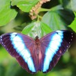 Butterfly — Stock Photo #10239750