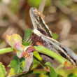 Butterfly — Stock Photo #10357385