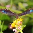 Butterfly — Stock Photo #10650192