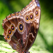 Schmetterling — Stock Photo #8588062