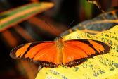 Mariposa. — Foto de Stock