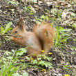 Squirrel spring — Foto de Stock