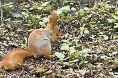 Squirrel spring — Stock Photo