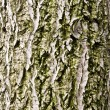 Cortex tree background — Stock Photo