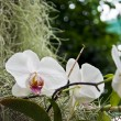 Orchid flower — Stock Photo #10505137