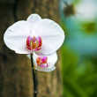 Orchid flower — Stock Photo #10505145