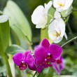 Orchid flower — Stock Photo #10505235