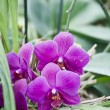 Orchid flower — Stock Photo #10505288