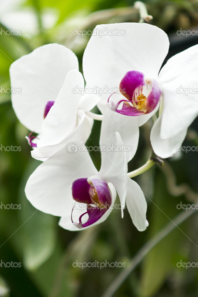 Orchidflower — Stock Photo #10505314