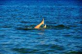 Pés da jovem mulher na água — Fotografia Stock