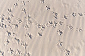 Convoluted bird footprint traces — Stock Photo