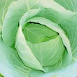 Cabbage over white background — Stock Photo