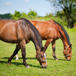 Royalty-Free Stock Photo: Horses grazing