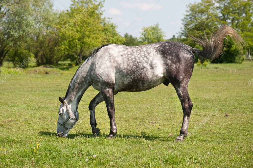 Horse grazing in the meadow  Stock Photo #10658353