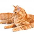 Lying Maine Coon cat — Stock Photo #9233356
