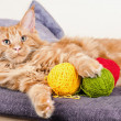 Main Coon cat with balls of wool — Stock Photo