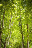 Trees — Stock Photo