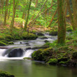 Stock Photo: Mossy Rock stream