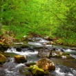 Quick Forest Stream — Stock Photo