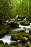Forest Stream with mossy rocks — Stock Photo