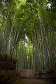 Bamboo grove — Stock Photo