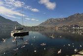 Swans swim on the mountain river — Stock Photo