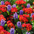 Stock Photo: Vibrant flowerbeds